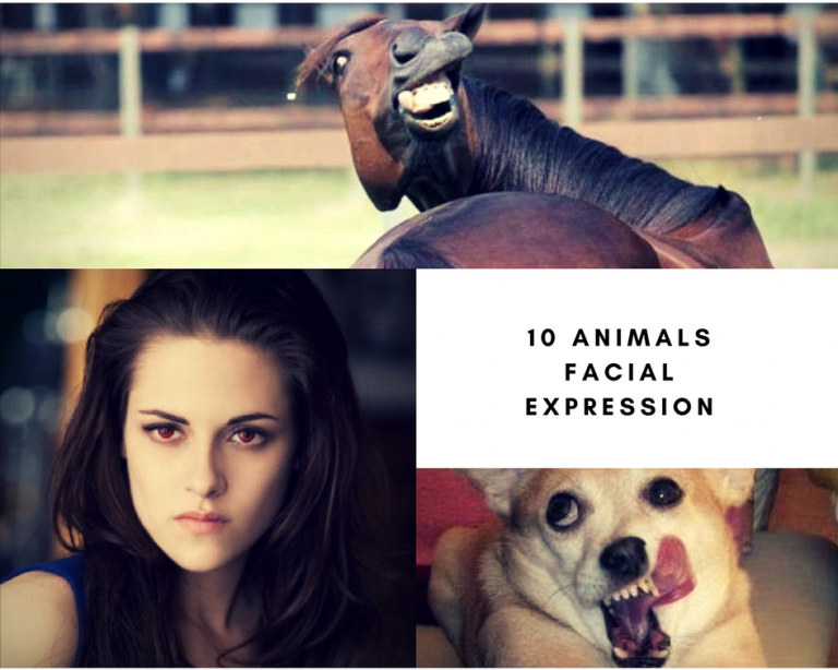 10 animals